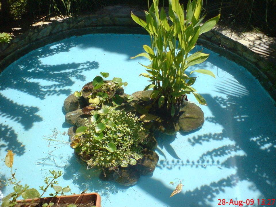 Kleiner Gartenteich Hotel Amara Club Marine Beldibi