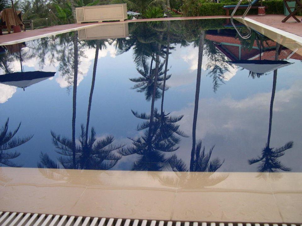 Palmen im Pool Hotel Cassia Cottages