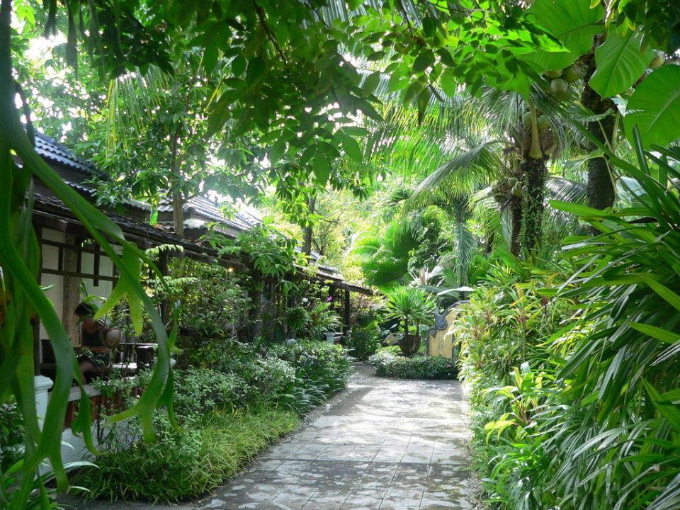 Gartenbereich zwischen den beiden Bungalowzeilen Bangtao Beach Chalet