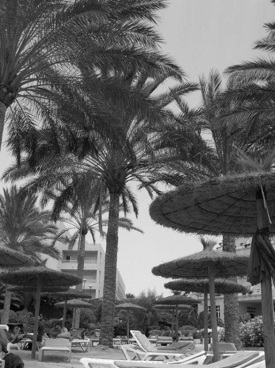 Palmen Hotel Cava Dòro