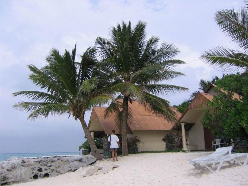 Palmen an Strand Summer Island Maldives