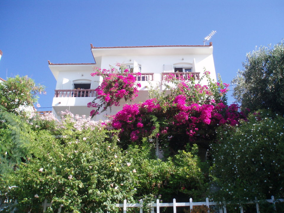 balkon oder blumenverwachsene terrasse pension olympias pythagorion holidaycheck samos. Black Bedroom Furniture Sets. Home Design Ideas