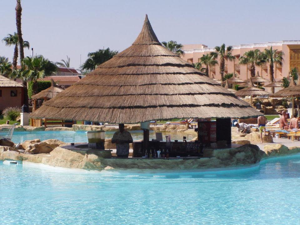 Swim Up Bar Beach Albatros Resort Hurghada Holidaycheck