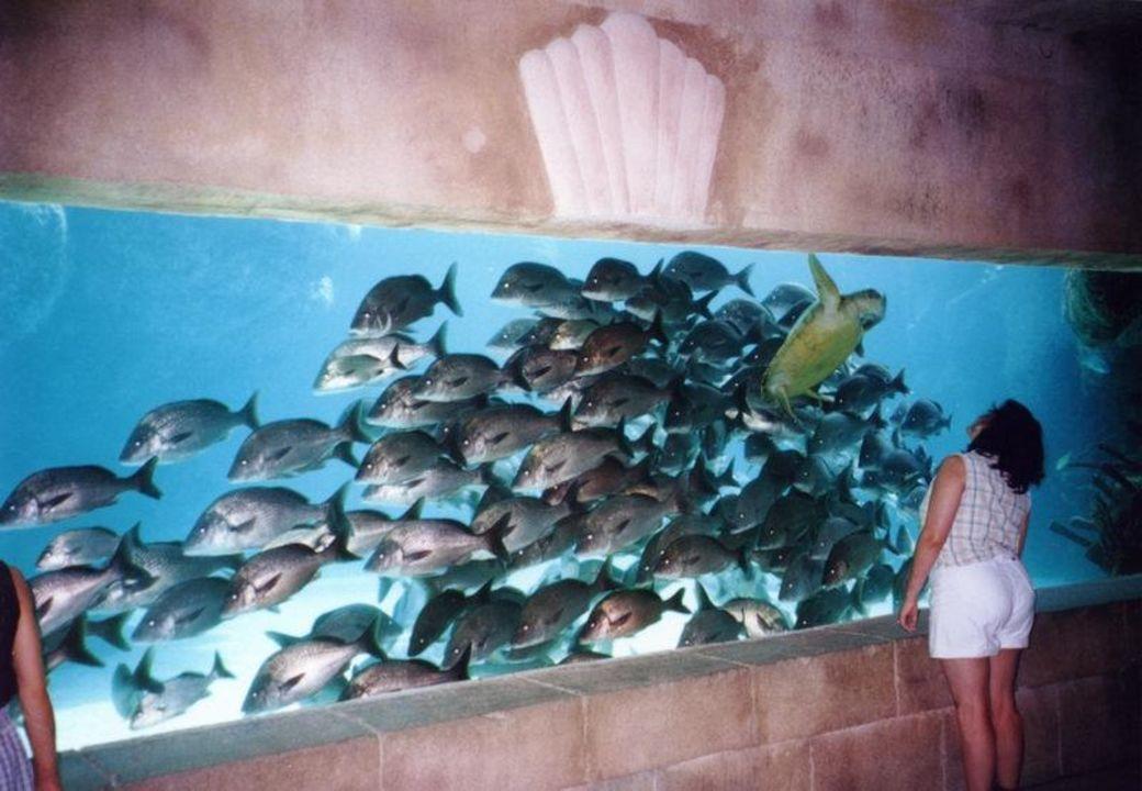 Hotel Atlantis (Paradise Island - Bahamas) Aquarium Atlantis Resort Royal Towers