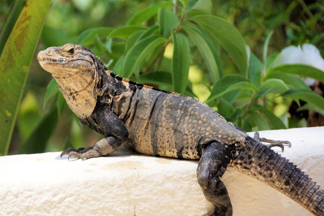 Costa Rica Parador Resort Spa