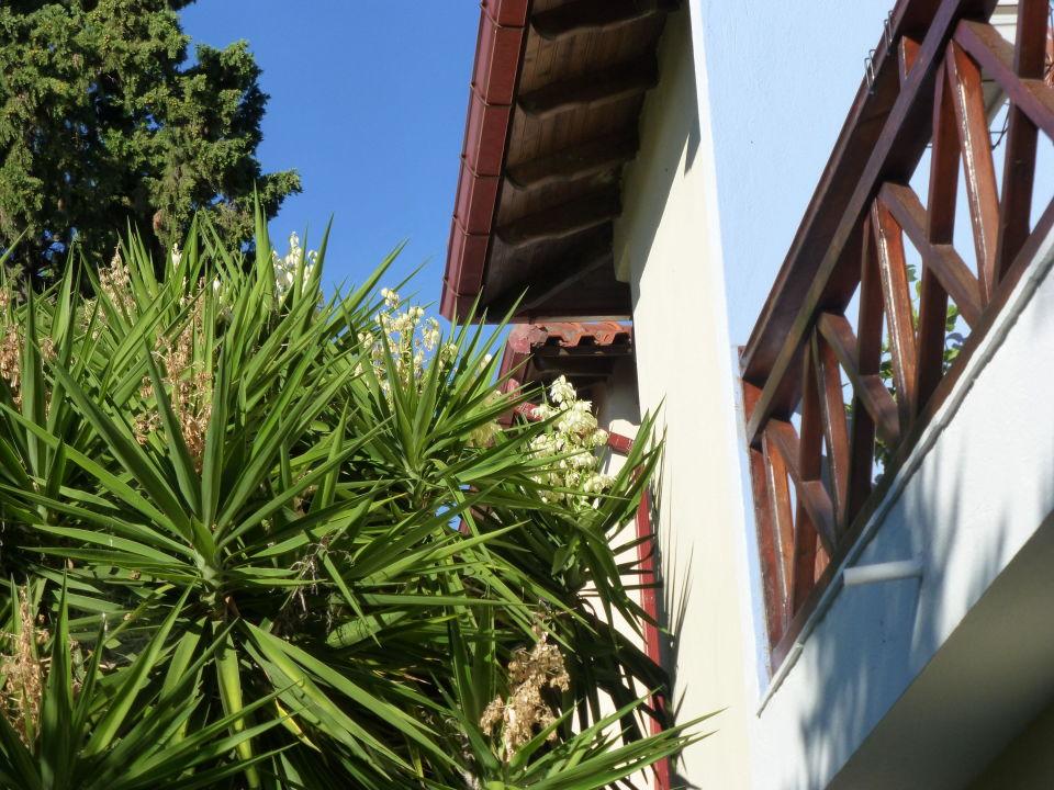 Ein kleiner garten aber viele pflanzen hotel xenios zeus nikiti holidaycheck chalkidiki - Ein kleiner garten ...