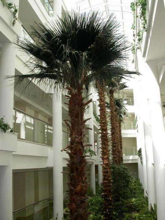 Innenhof Arcanus Side Resort