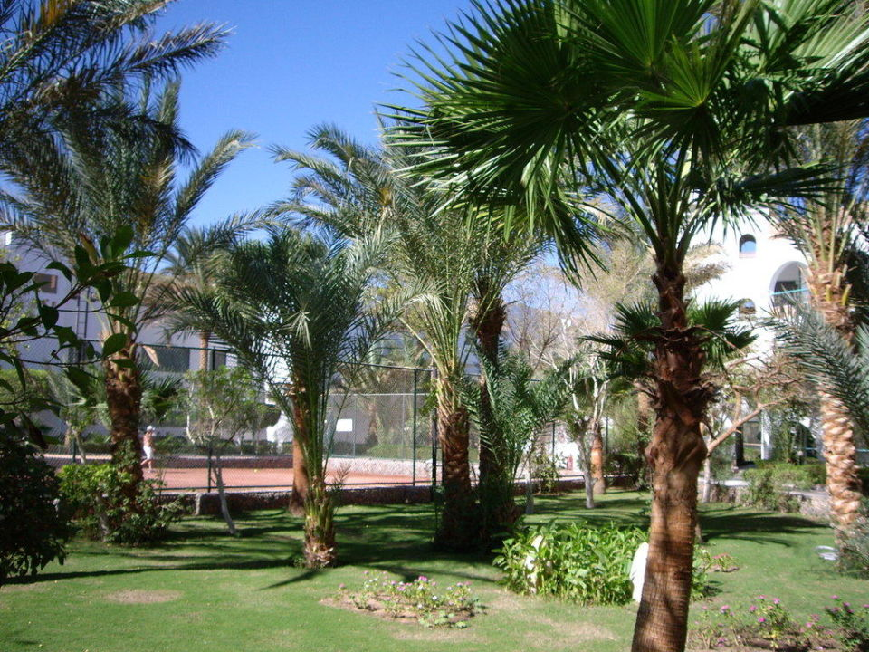 Palmen Bel Air Azur Resort