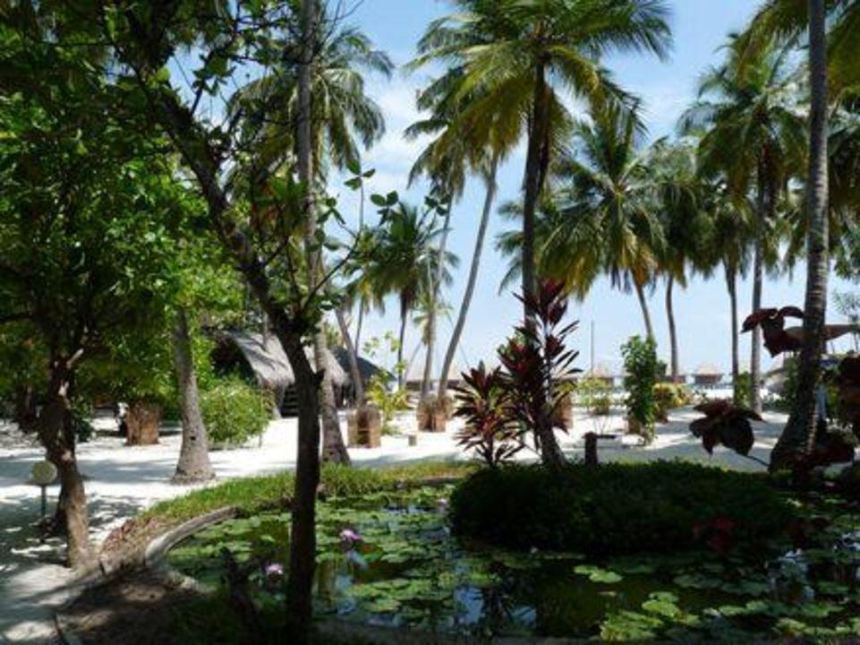 Bild gartenanlage mit teich zu thulhagiri island resort for Gartenanlage mit teich