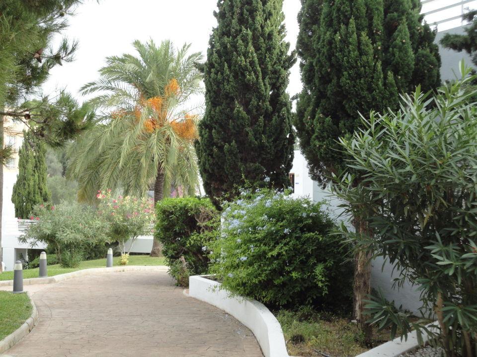 Weg zum Restaurant Mar Hotels Ferrera Blanca