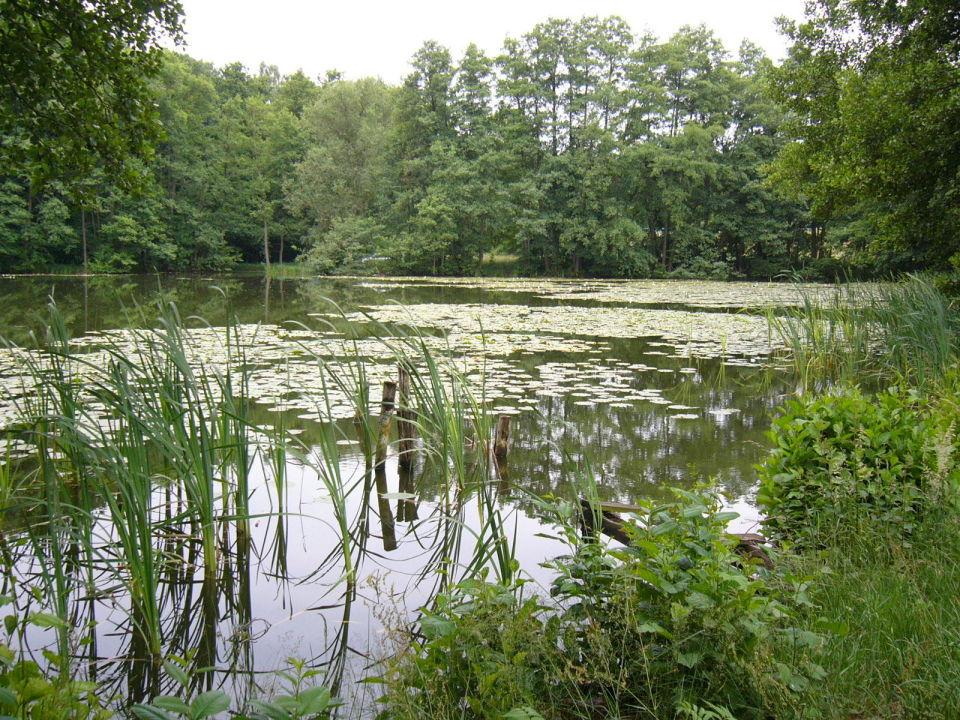 Naturgewässer Waldhotel Seerosenhof (geschlossen)