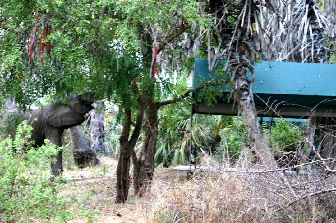 Unerwarteter Besuch Lake Manze Camp Selous