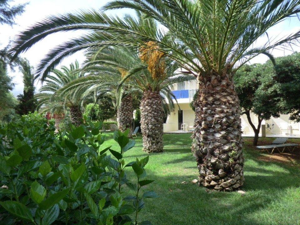 Garten mit palmen hotel cretan malia park malia holidaycheck kreta griechenland - Garten mit palmen gestalten ...
