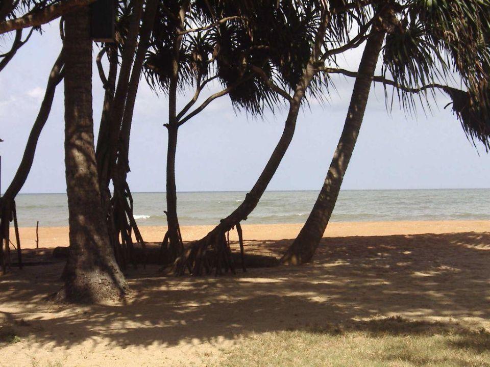 Blick auf's Meer Hotel Ranweli Holiday Village