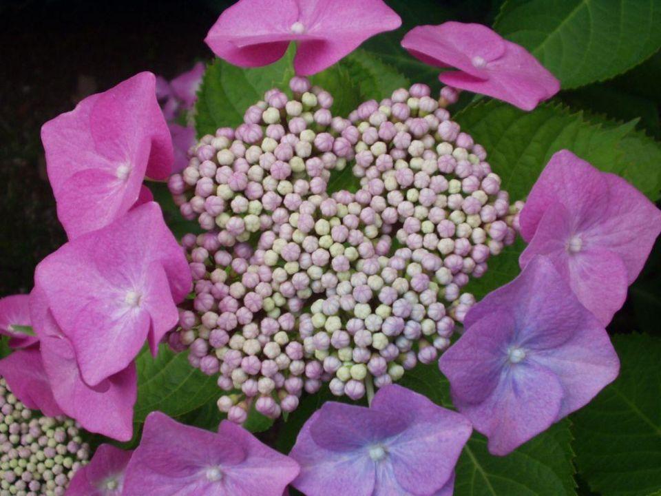 Blüte im Park der Villa Giada Hotel Giada
