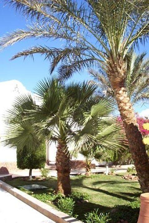 Im Garten des Iberotel Arabella Arabella Azur Resort