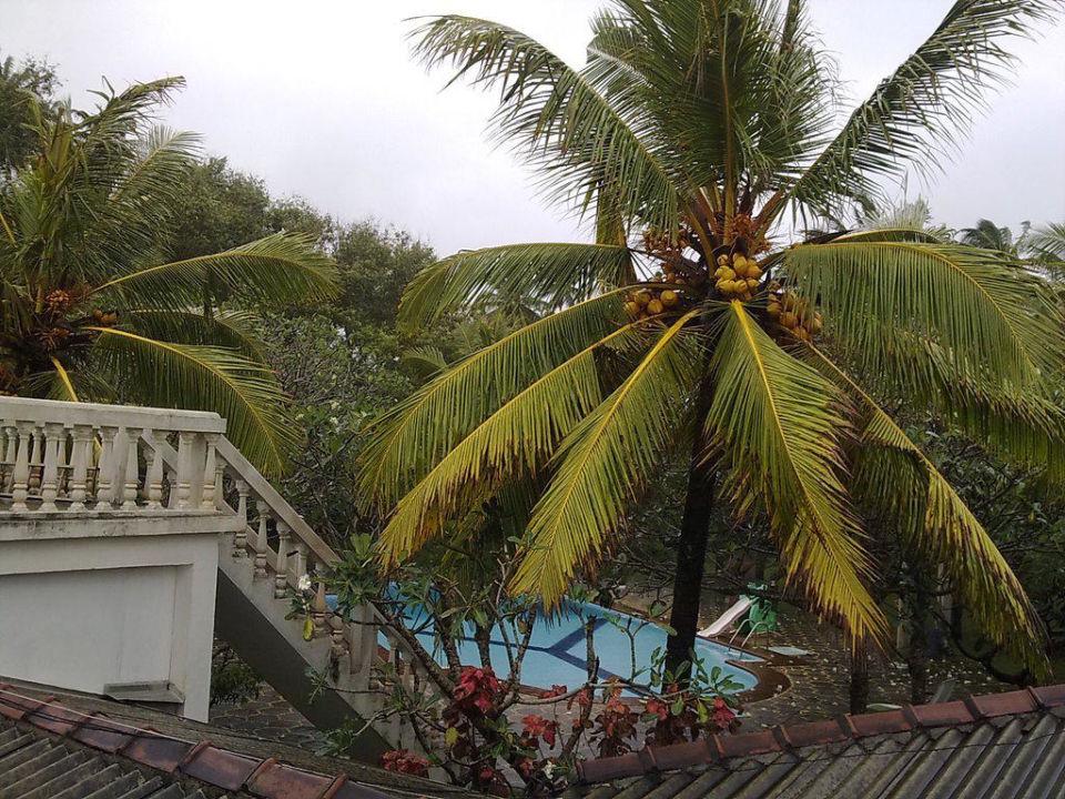 Blick zum Pool Hotel Ypsilon / Ypsylon