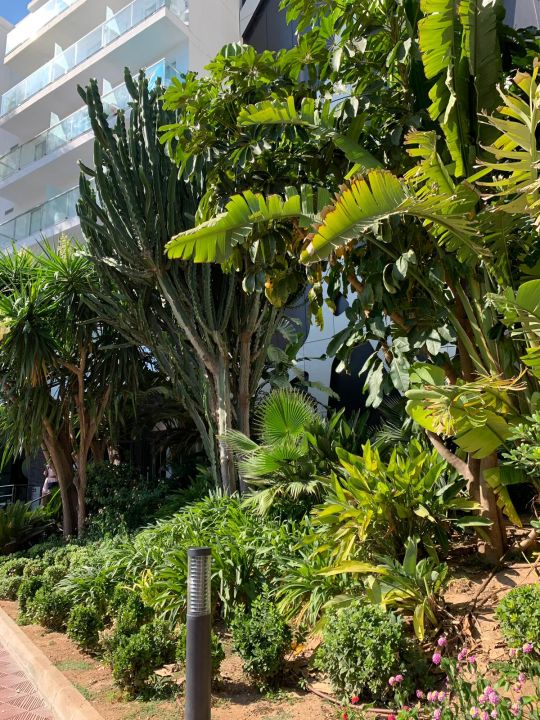 Gartenanlage Iberostar Selection Playa de Palma