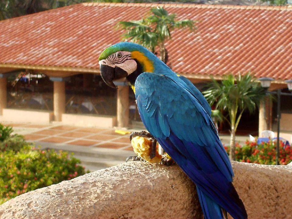 Hotel Papagei Hotel Costa Caribe Beach