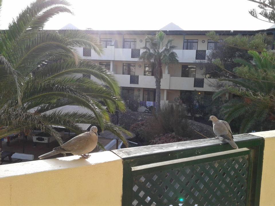 Hotel Trebol Costa Teguise Lanzarote