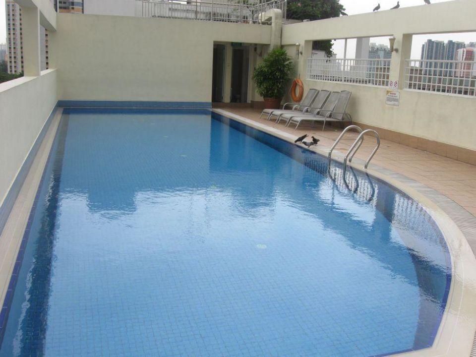 pool auf dem dach fragrance hotel selegie singapur holidaycheck central district. Black Bedroom Furniture Sets. Home Design Ideas