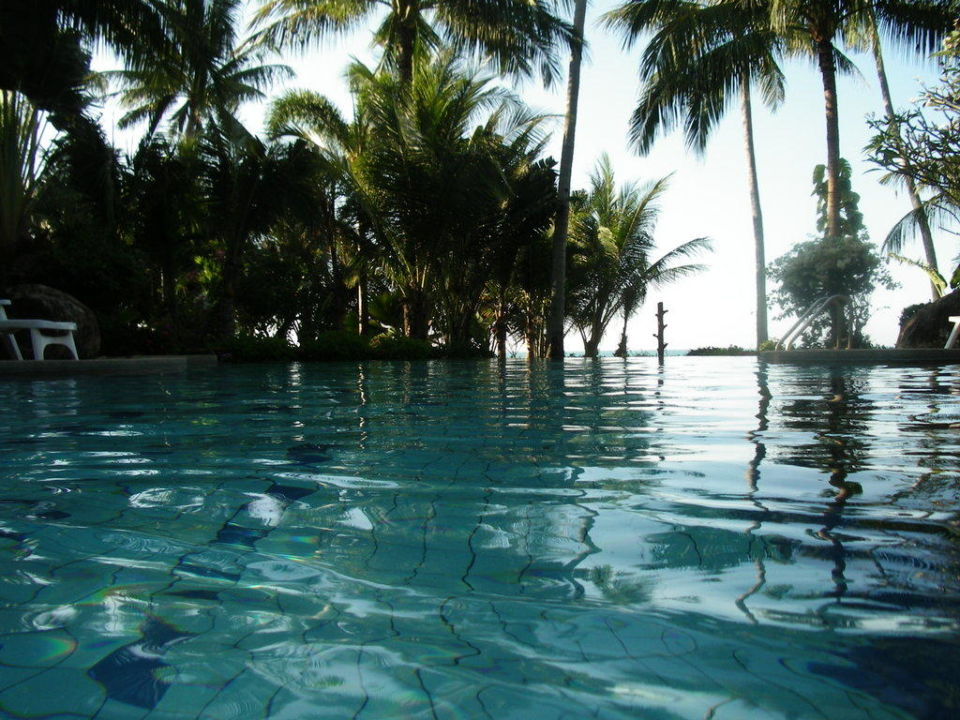 Poolansicht in Richtung Meer Coconut Tropicana T 1