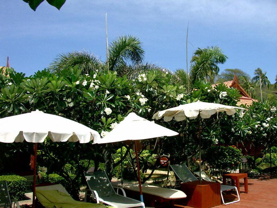 Schattenspendene Bäume am Pool Hotel Phi Phi Erawan Palms Resort