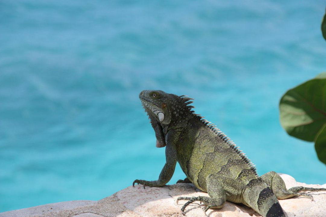 Unser Haustier mit Blick aufs Meer Sun Reef Village on Sea