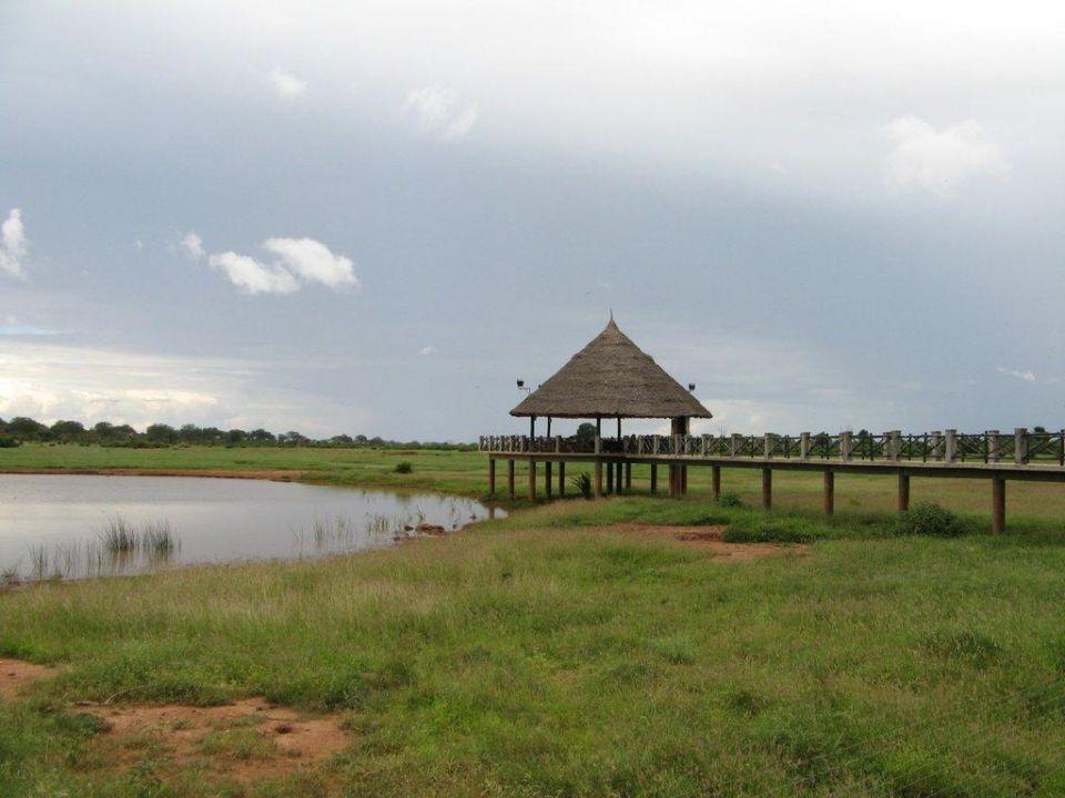 Steg zum Wasserloch Hotel Voi Wildlife Lodge