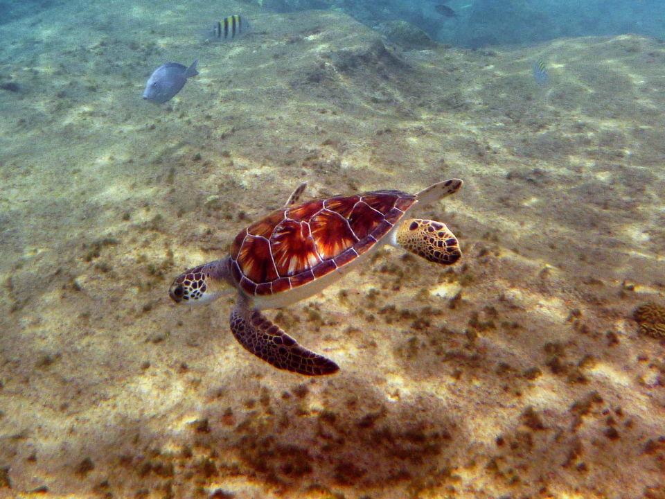 Quot Meeresschildkr 246 Te Quot All West Apartments Amp Diving In Sabana