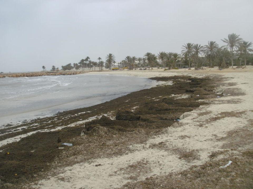 Strand mit Algenteppich Hotel Seabel Aladin Djerba