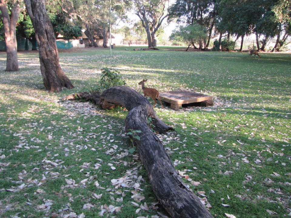 Wilde Tiere im Park Letaba Rest Camp