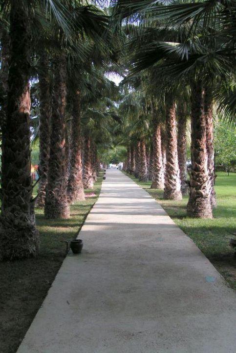 Palmenallee auf dem Weg zum Strand Hotel Gardenia Beach