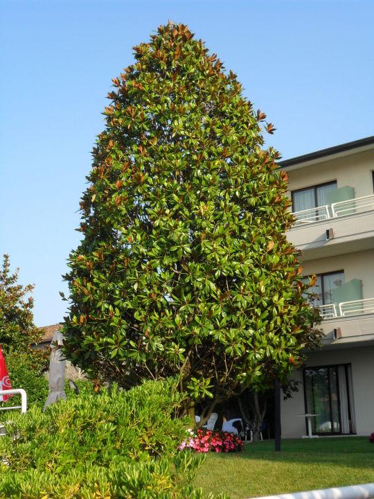 Gartenanlage Hotel Porto Azzurro