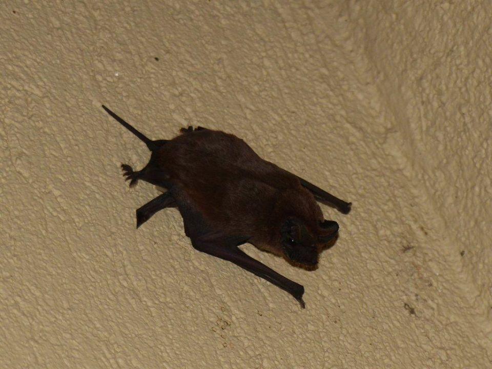 Fledermäuse Restcamp Lower Sabie