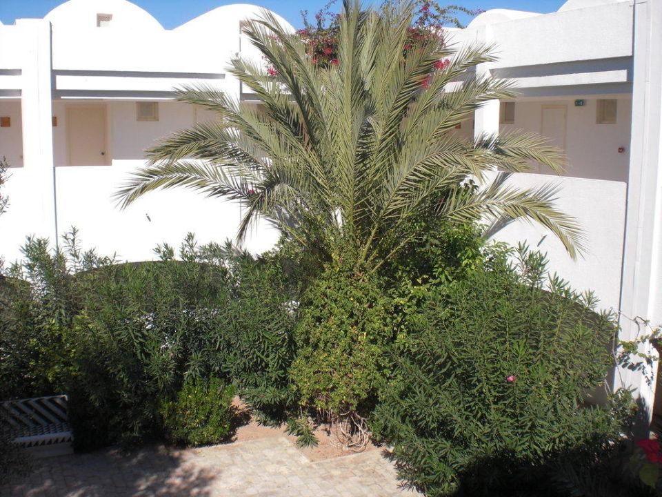 Innenhof Hotel Seabel Rym Beach Djerba