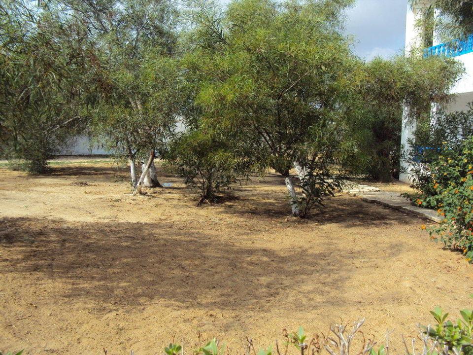 Randbereiche des Hotels ungepflegt Club Lookea Salammbo