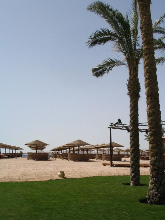 Strand mit Palmen The Grand Makadi