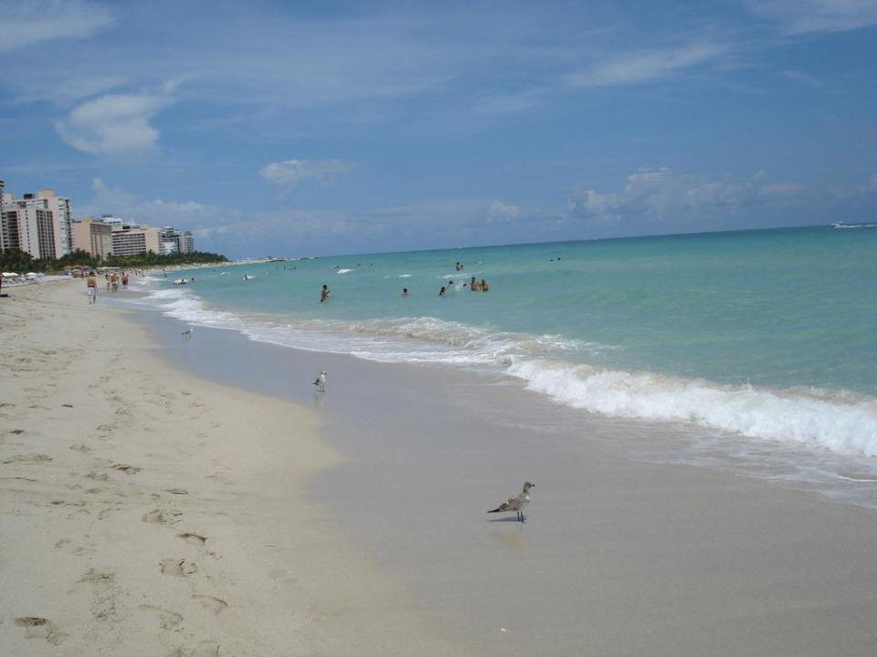 South Beach The Palms Hotel & Spa