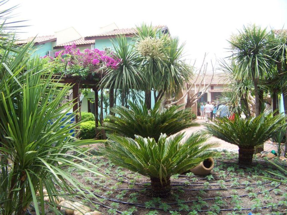 Hotel Club Gypsophila Holiday Village Hotel Club Gypsophila Holiday Village
