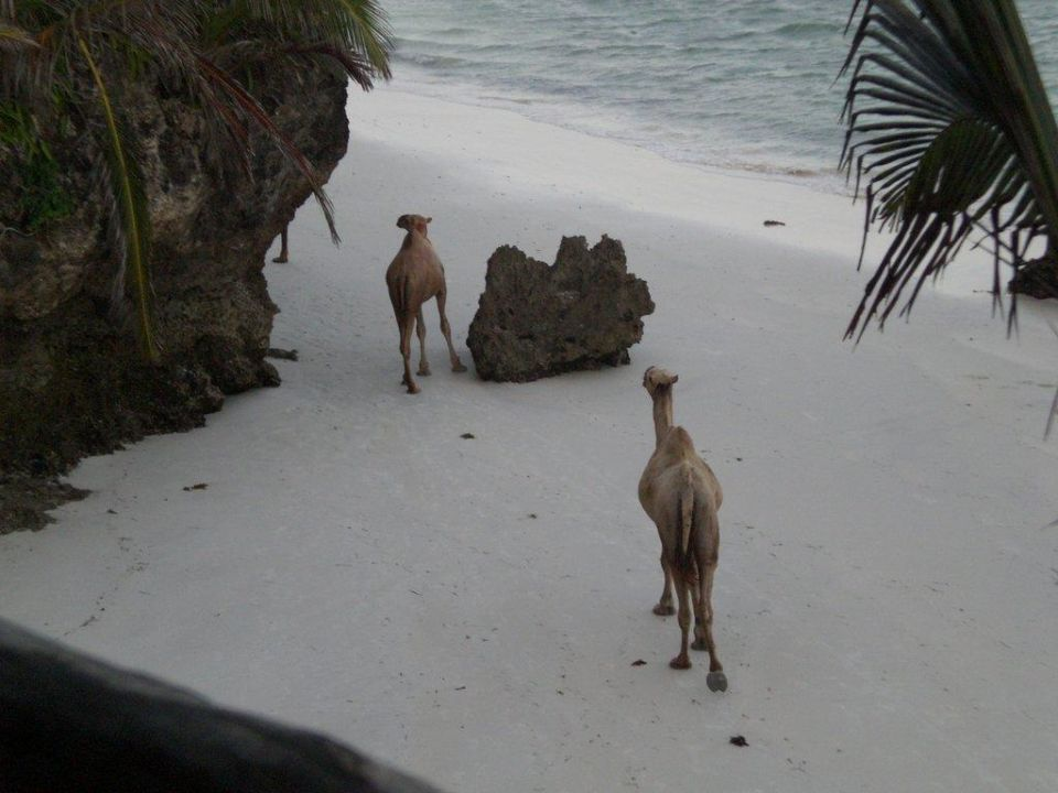 Hotelstrand mit Kamelen Bahari Beach Hotel