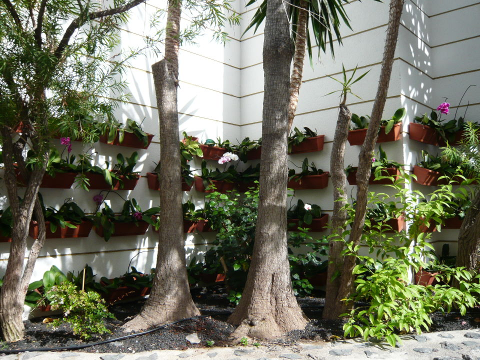 Gartenanlage adri n hoteles jardines de nivaria costa for Adrian jardines de nivaria
