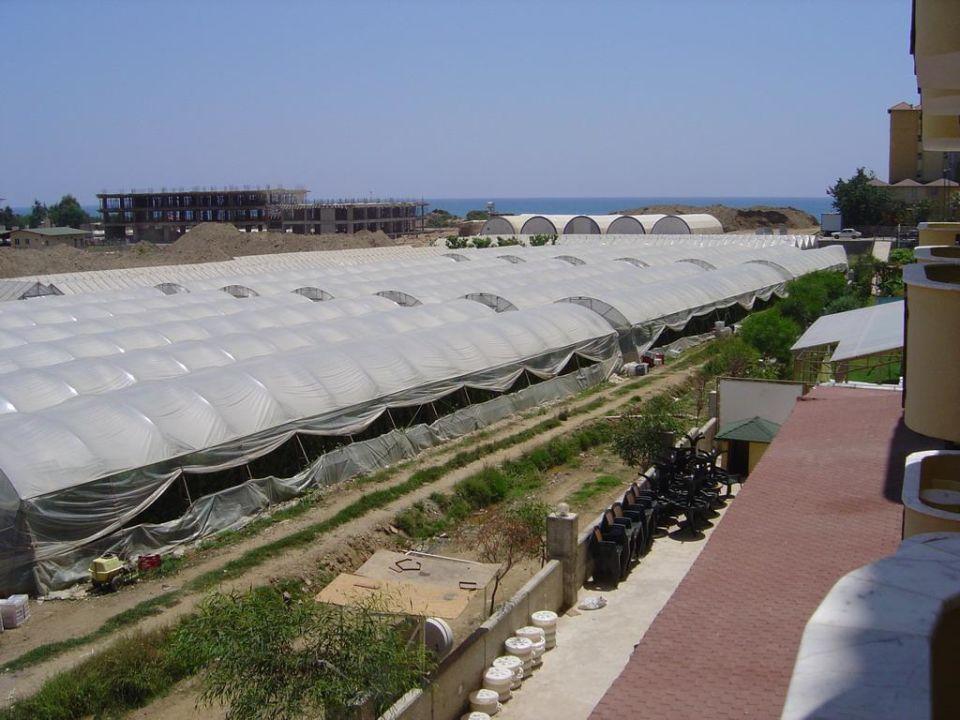 Unverbaubarer Blick auf die Gewächshäuser vom Zimmer Hotel Titan Garden