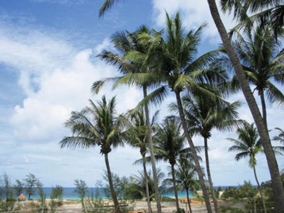 Palmen Best Western Phuket Ocean Resort