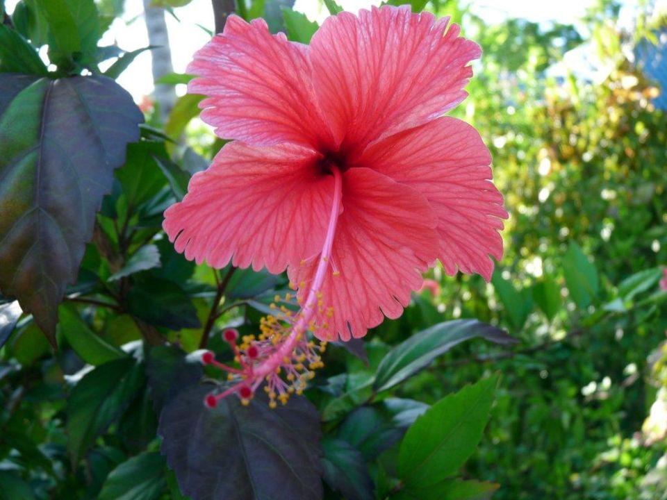 Blume vor unserem Bungalow Hotel Grand Paradise Samana
