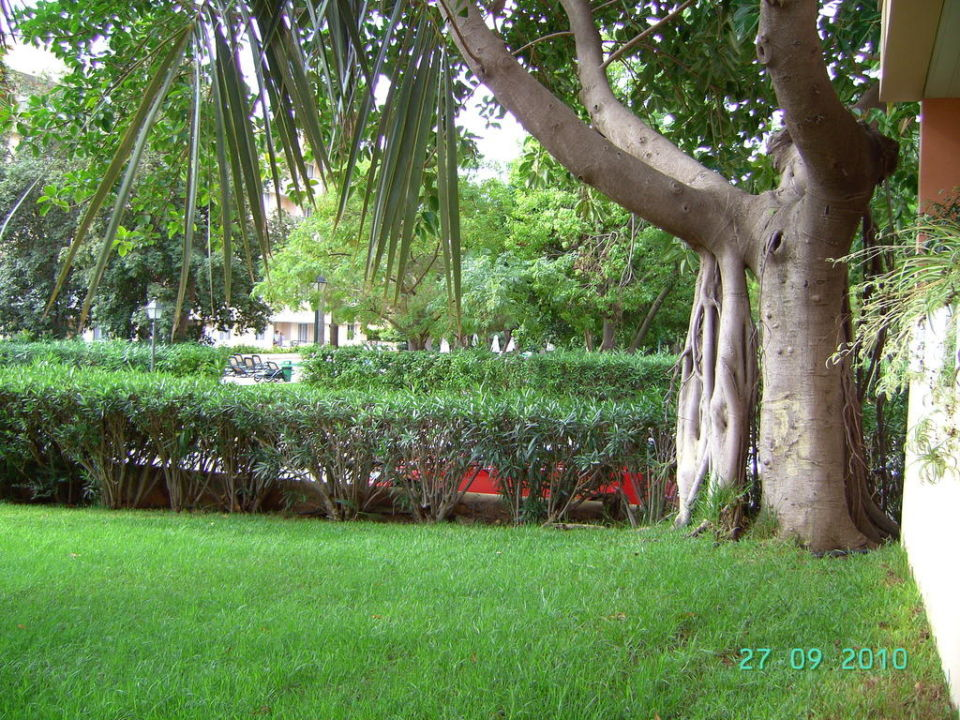 Garten Aparthotel Tropicana & Trebol