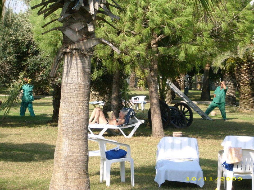 Relax und Arbeit unter Palmen Hotel Süral Saray