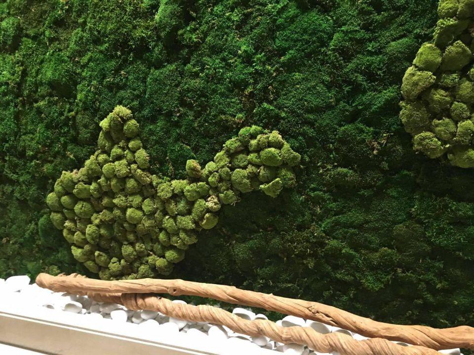 Bepflanzte Wand bepflanzte wand ikos oceania nea moudania holidaycheck