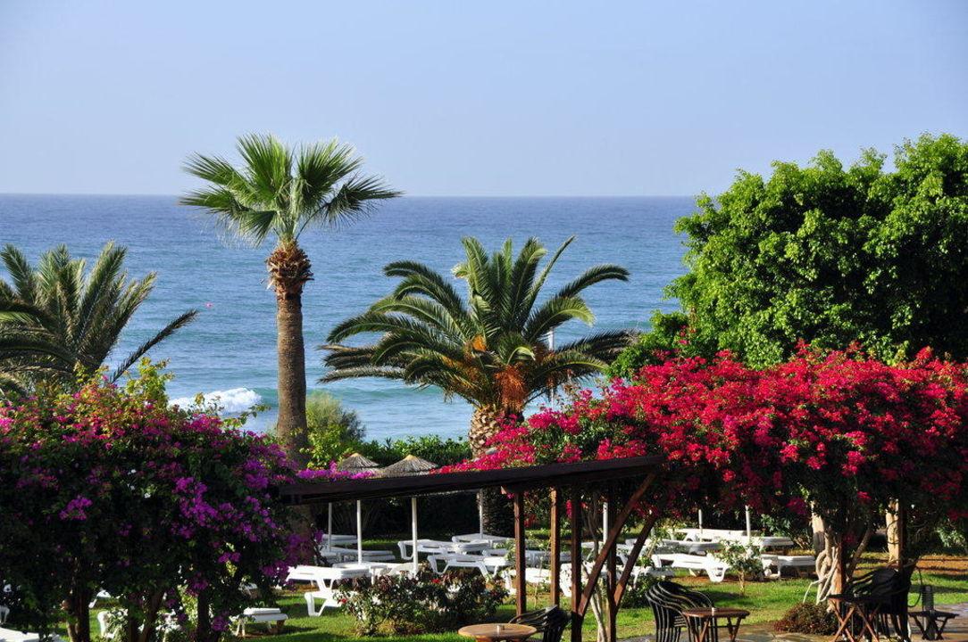 Eine Oase der Ruhe Hotel Alion Beach