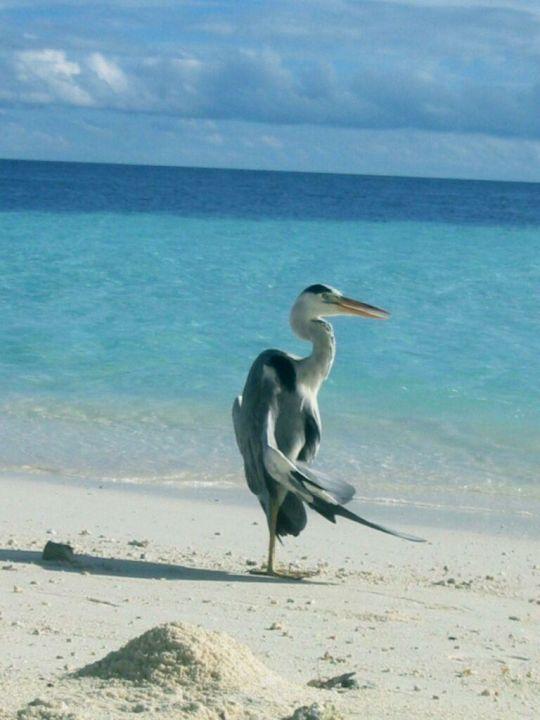 ...mein Name Hotel Fihalhohi Island Resort
